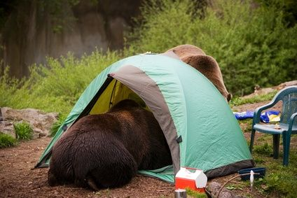 Bears in tent